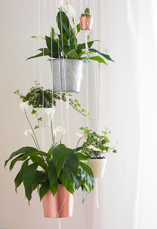 D32_nouvelledaily-hangingplants