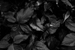 Black Friday : 4 astuces pour y résister