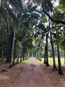 Jardin de Pamplemousses - Île Maurice