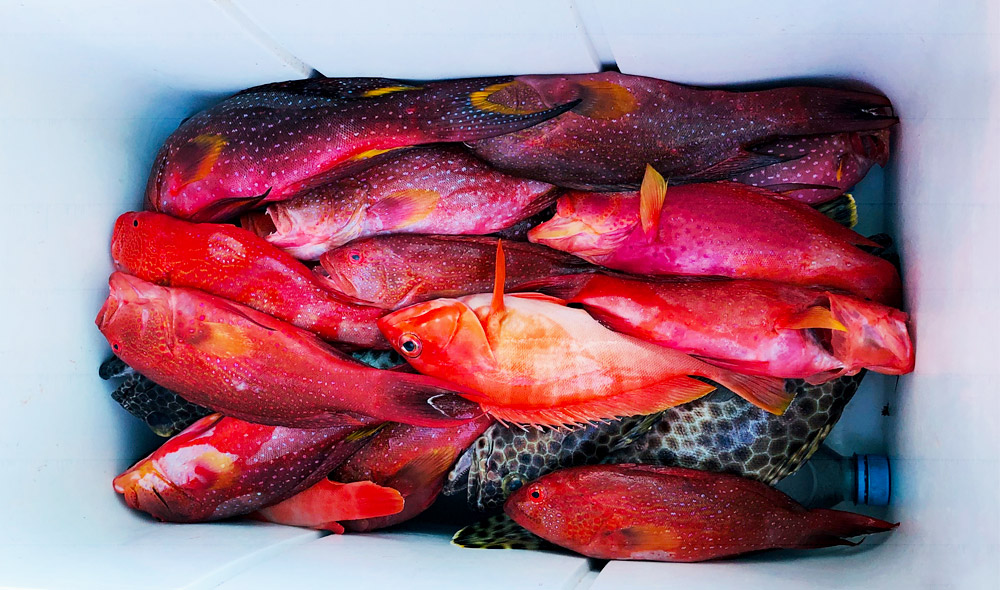 Pêche à l'île maurice