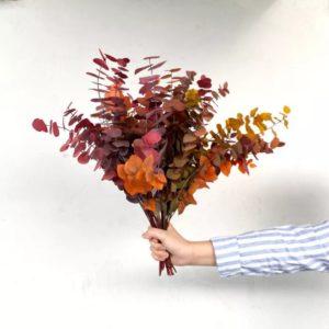 Décoration d'automne - Bouquet d'eucalyptus